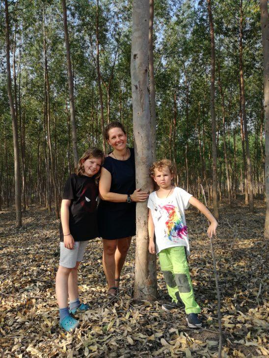 Eukalyptus - 2,5 Jahre jung