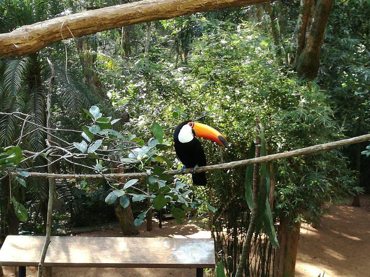 Tukan, chillig, im Vogelpark